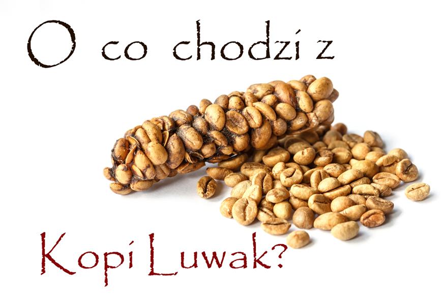 O co chodzi z Kopi Luwak?
